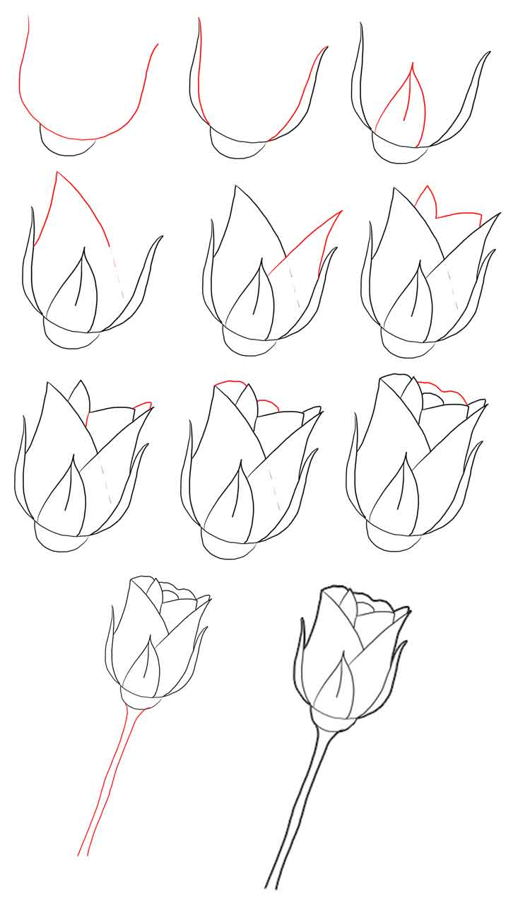 how to draw a rose - 750×1274