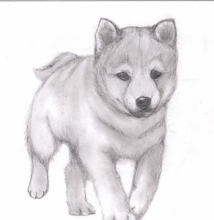 Картинки для срисовки карандашом для 12 лет