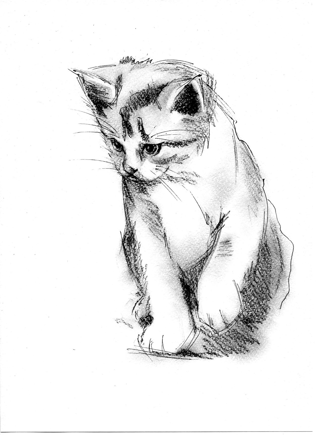 Рисунки карандашом котенок