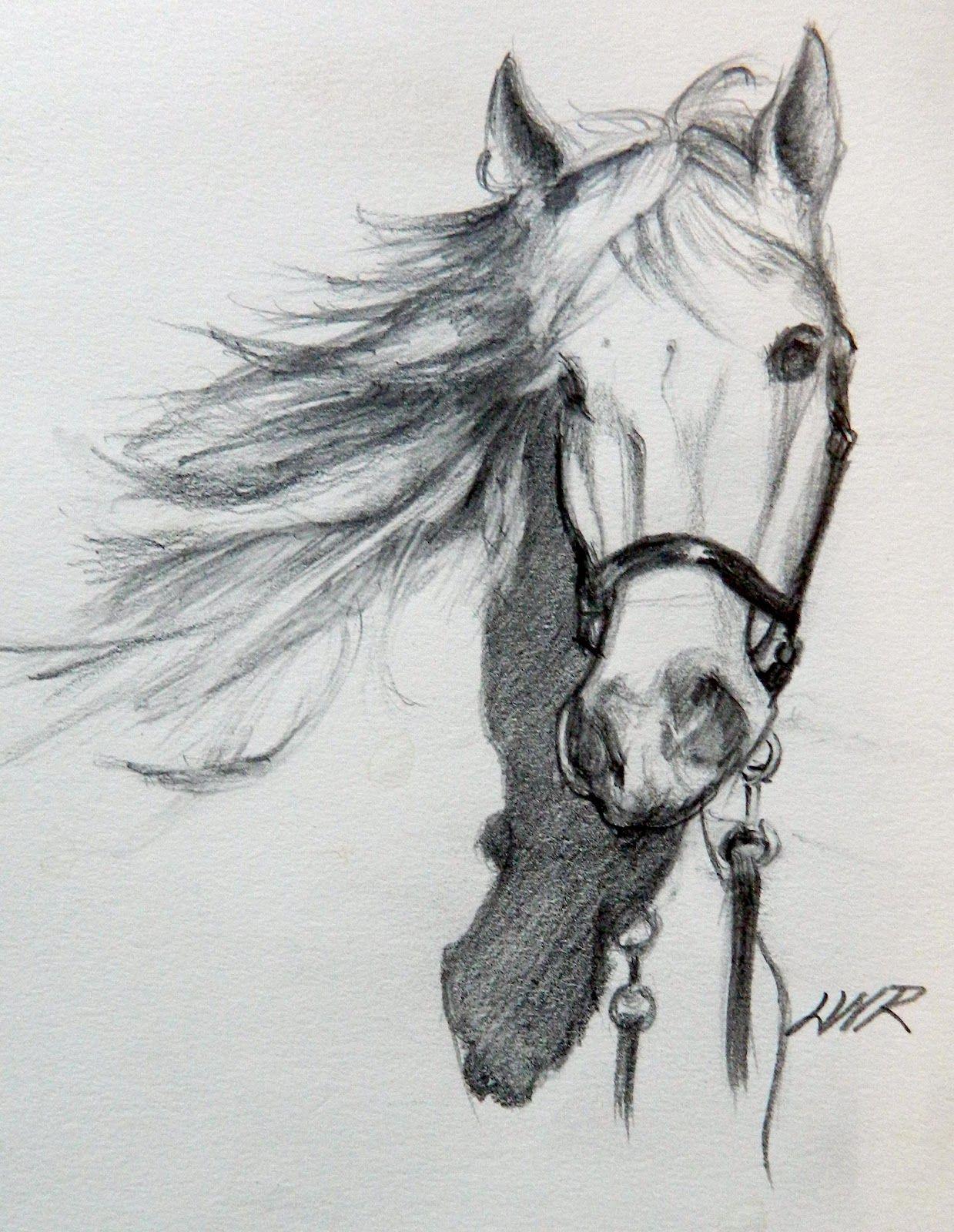 рисунки животных карандашом для начинающих художников