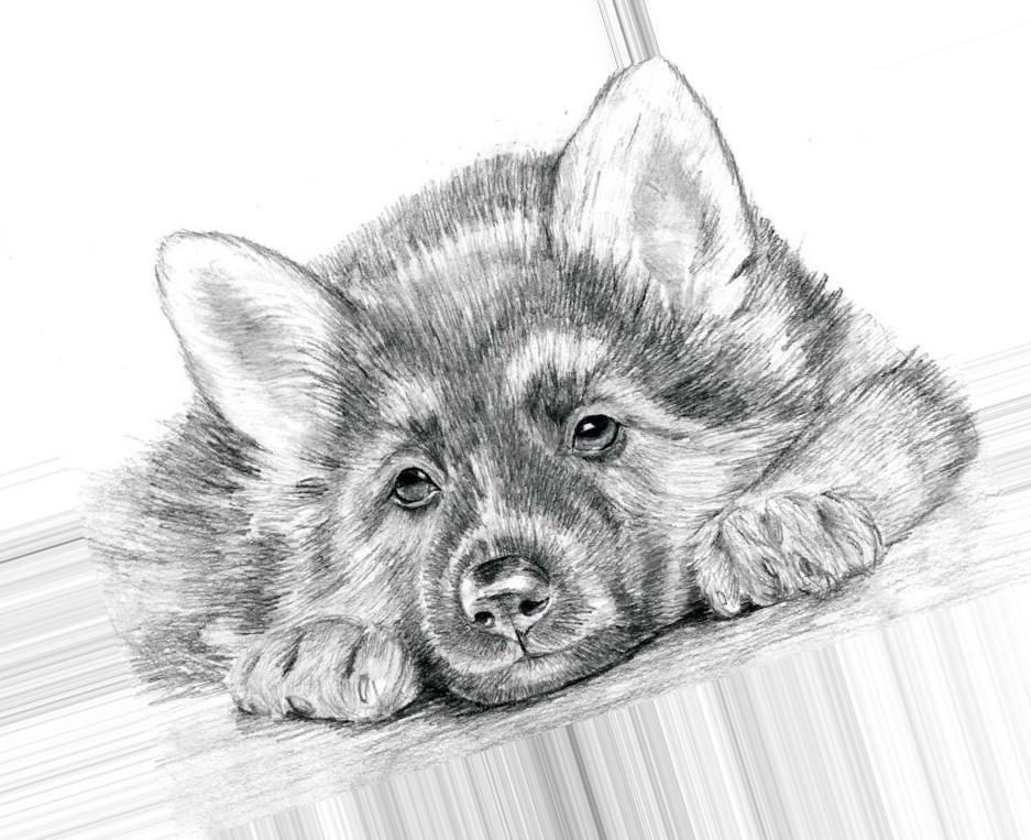 Открыток, рисунок животные карандашом