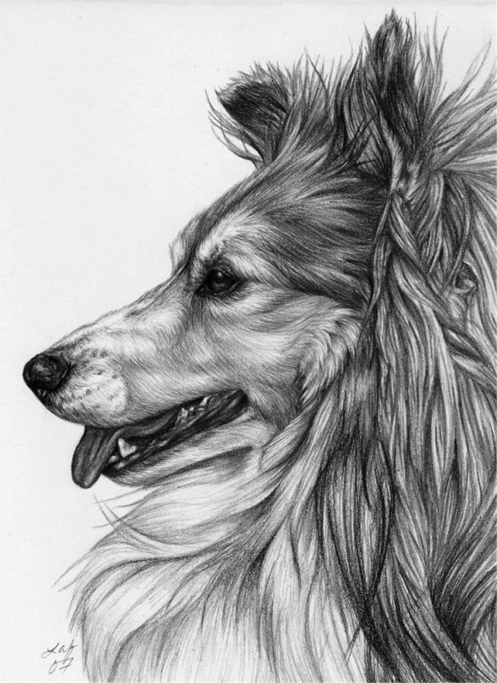Рисунок животные карандашом