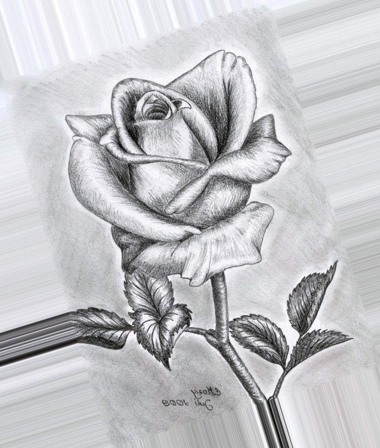 Картинки, картинки цветы нарисованные карандашом