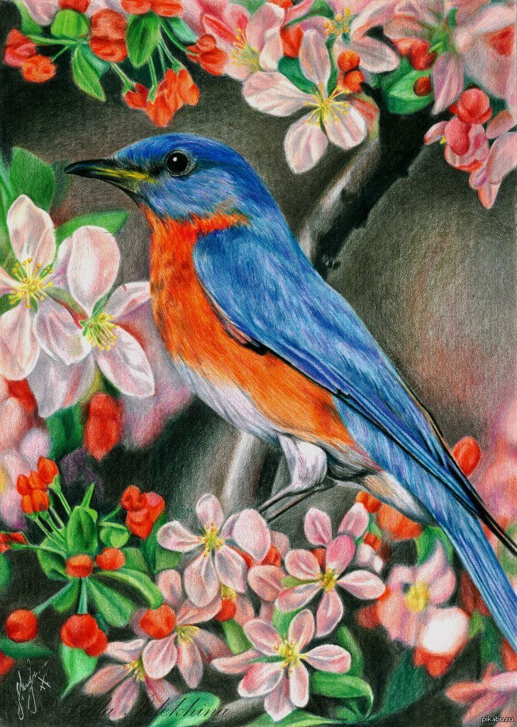 Рисуем открытки цветными карандашами