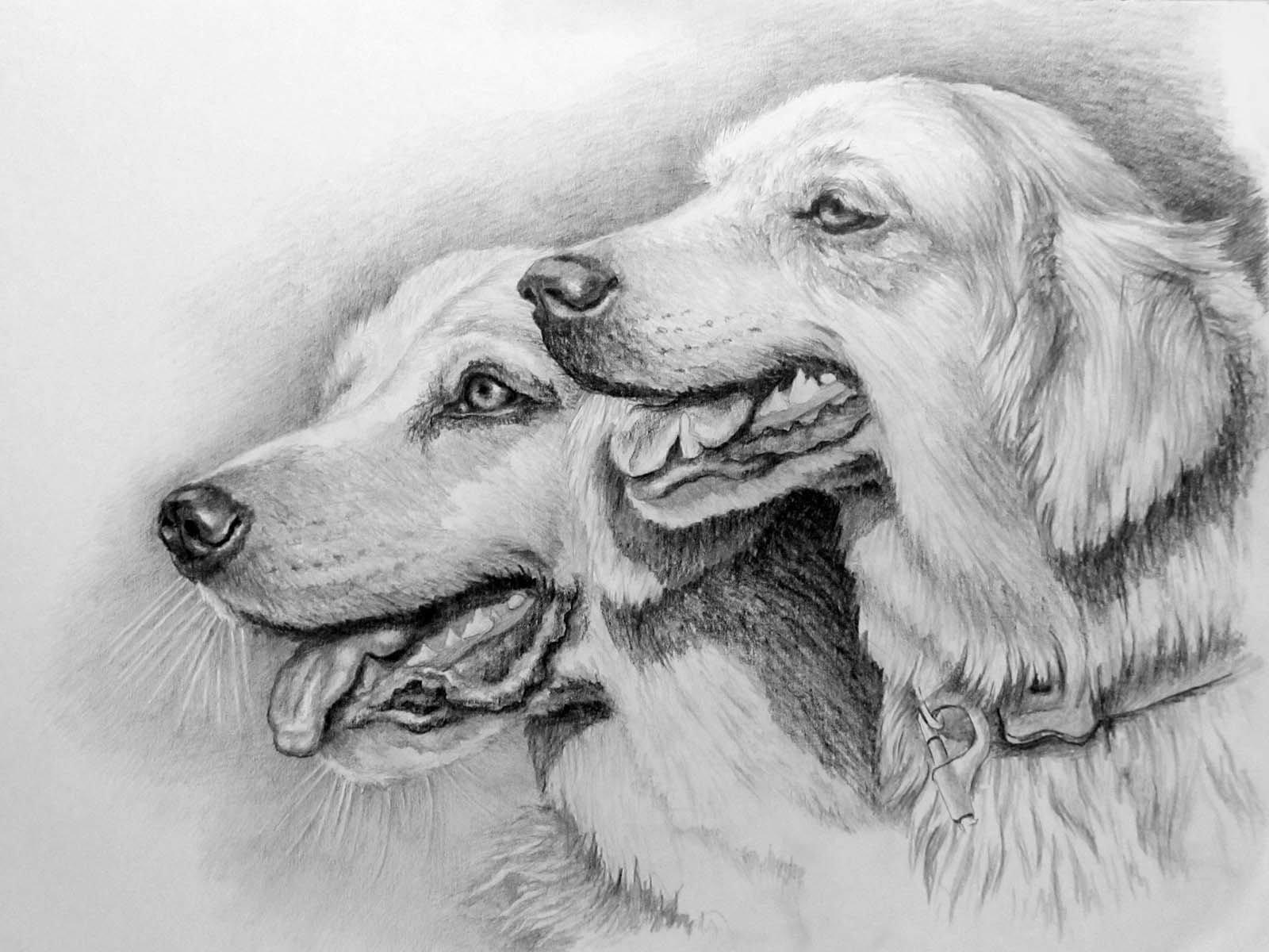 рисунки карандашом профессиональные картинки перед тем как