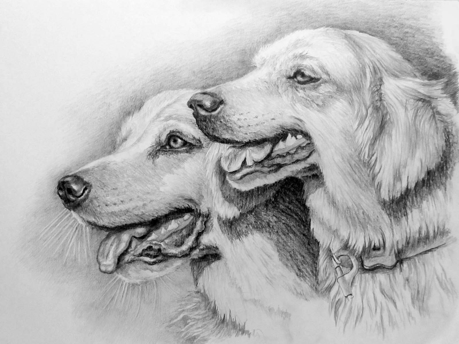 Рисунки которые нарисованы простым карандашом