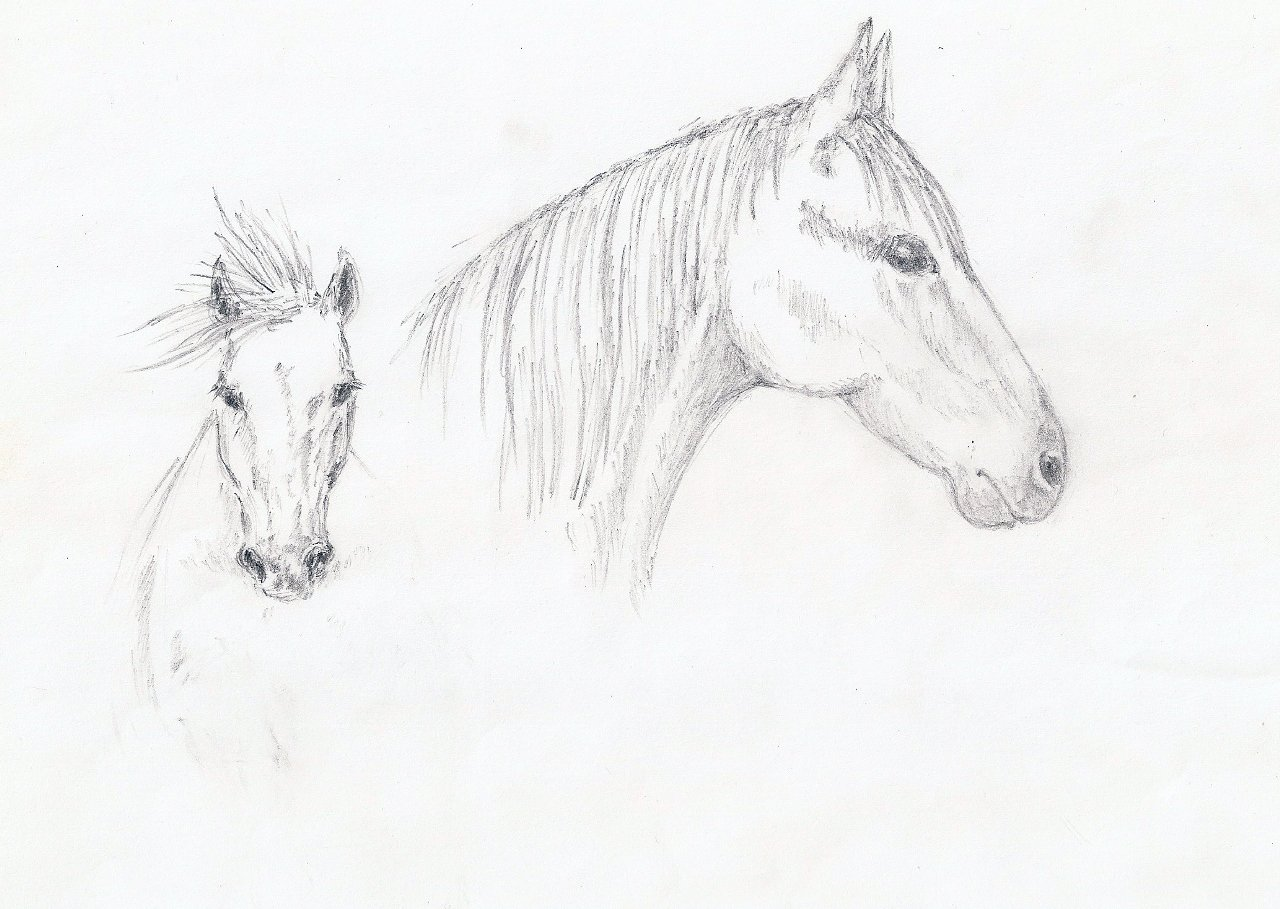 Картинка лошади карандашом, открыток рыболову любителю