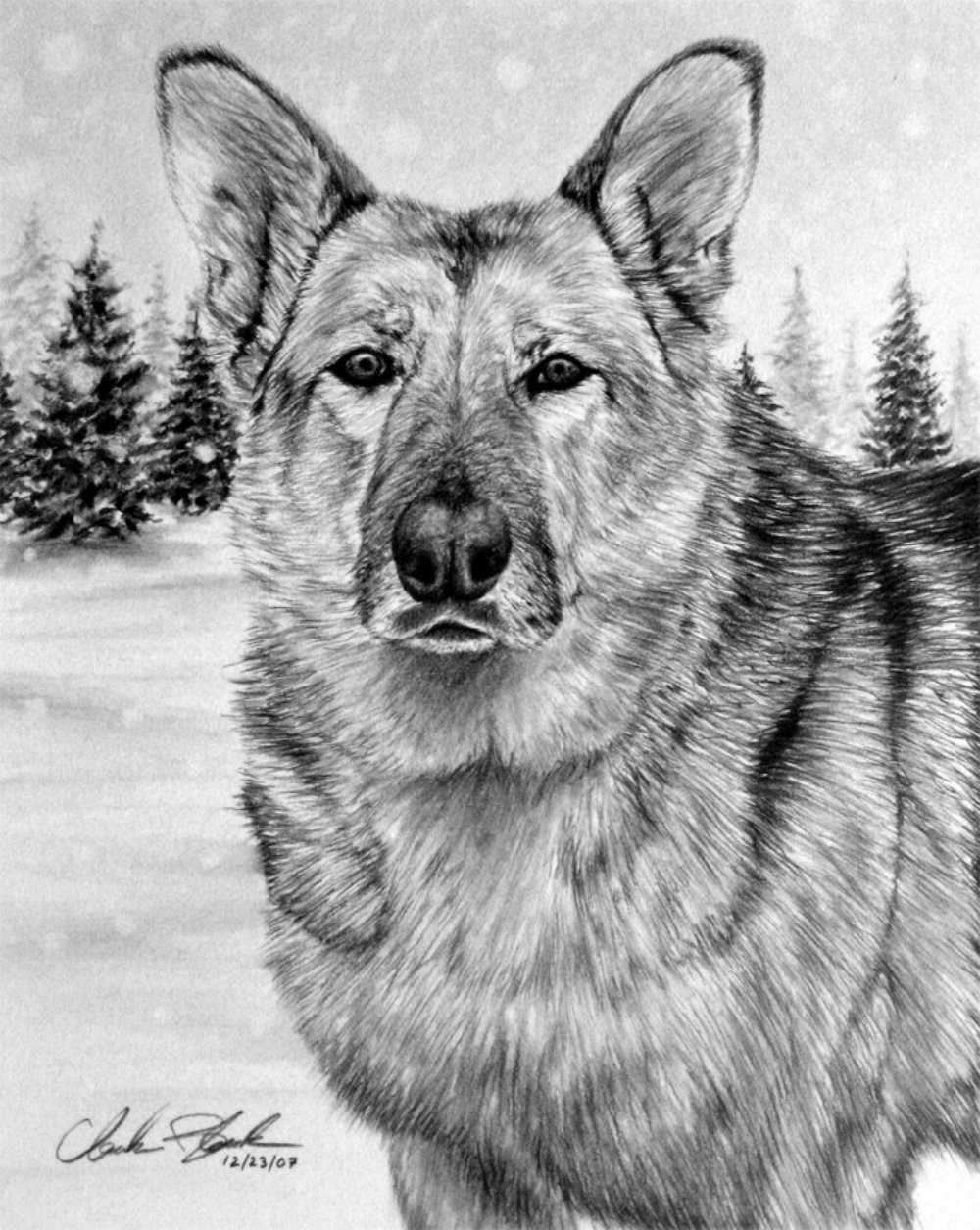 разные картинки животных карандашом часто снимала репортажи