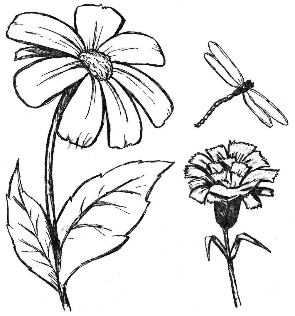 Картинки цветы рисунки карандашом