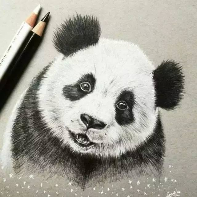 Картинки графика карандашом панда для начинающих