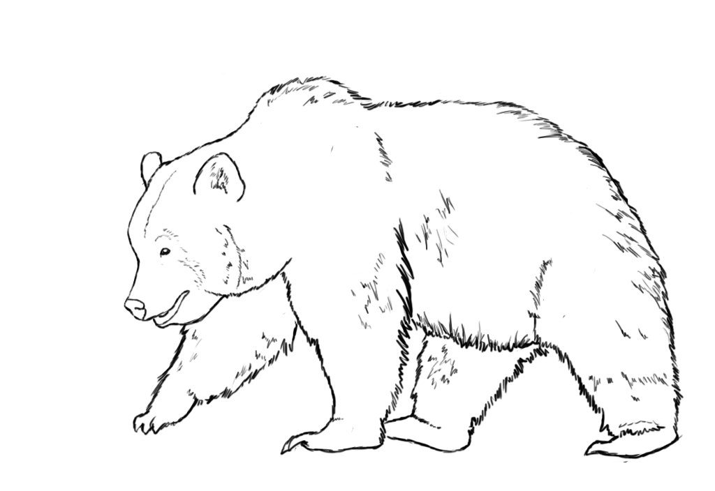 Рисунки картинки медведя, днем рождения мужу