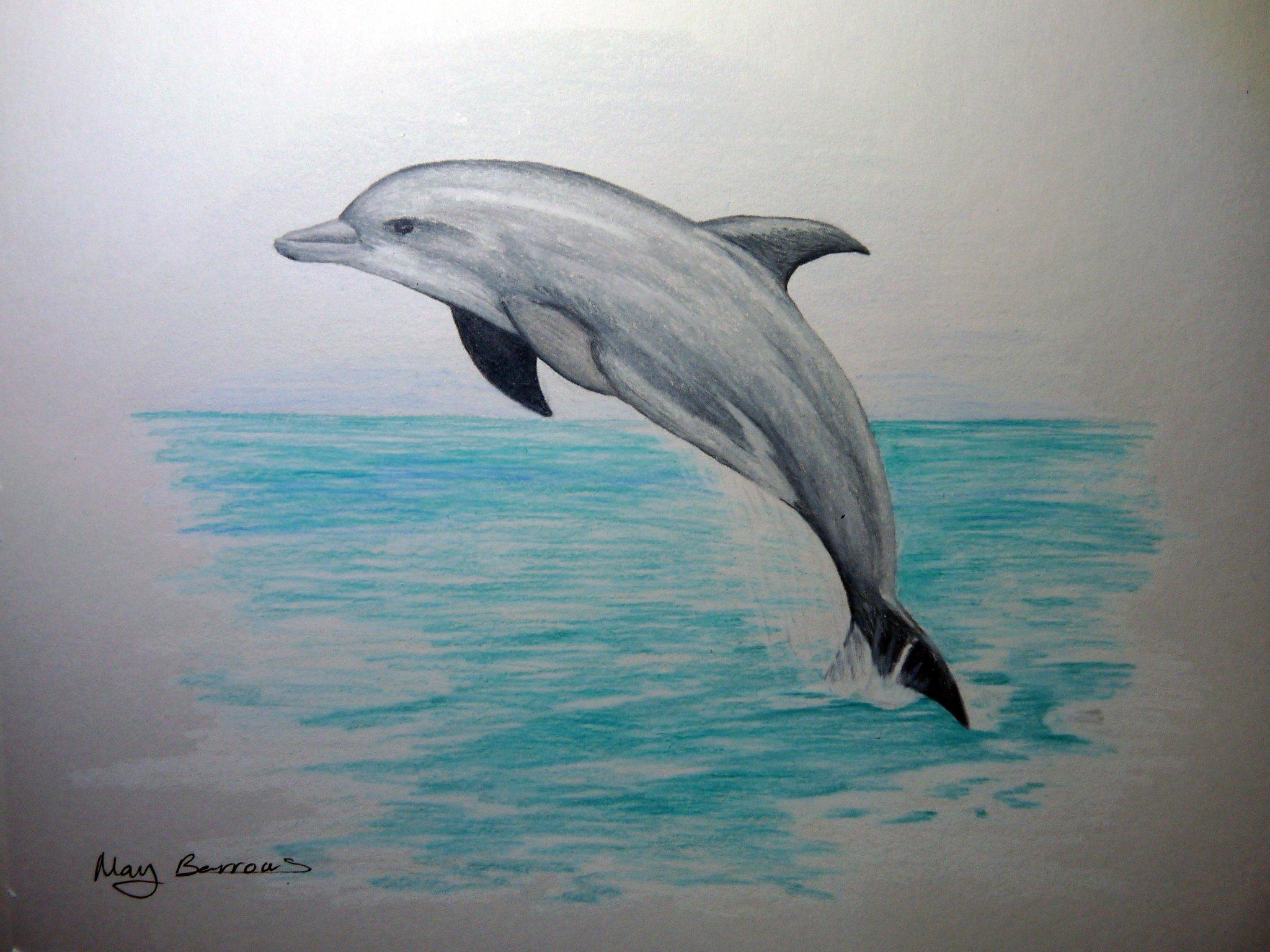 играет невероятно фото и рисунки дельфинов порода