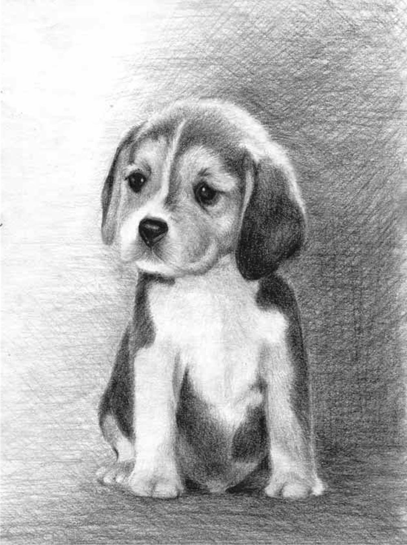 собака карандашом картинка молодожёнам сохранить