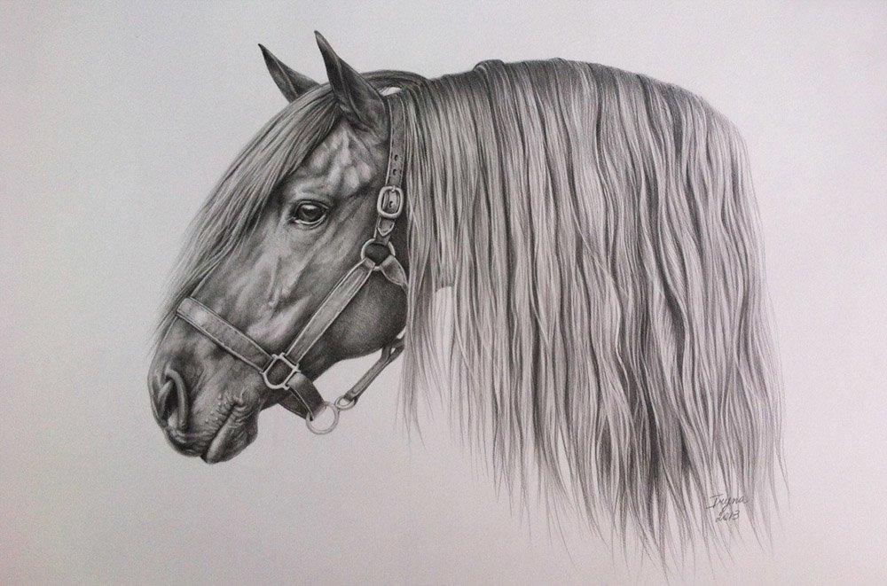 Рисунок на лошади, фото котов
