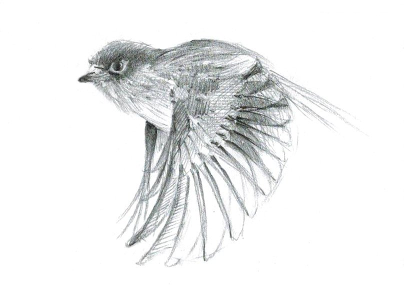 Название и фото всех птиц в мире сети появились