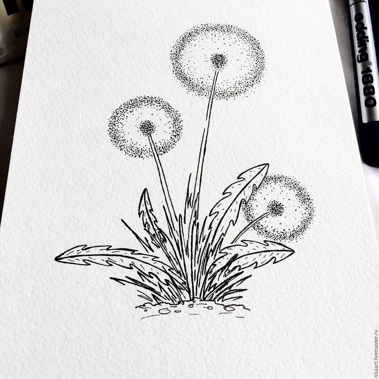 Картинка карандашом одуванчик
