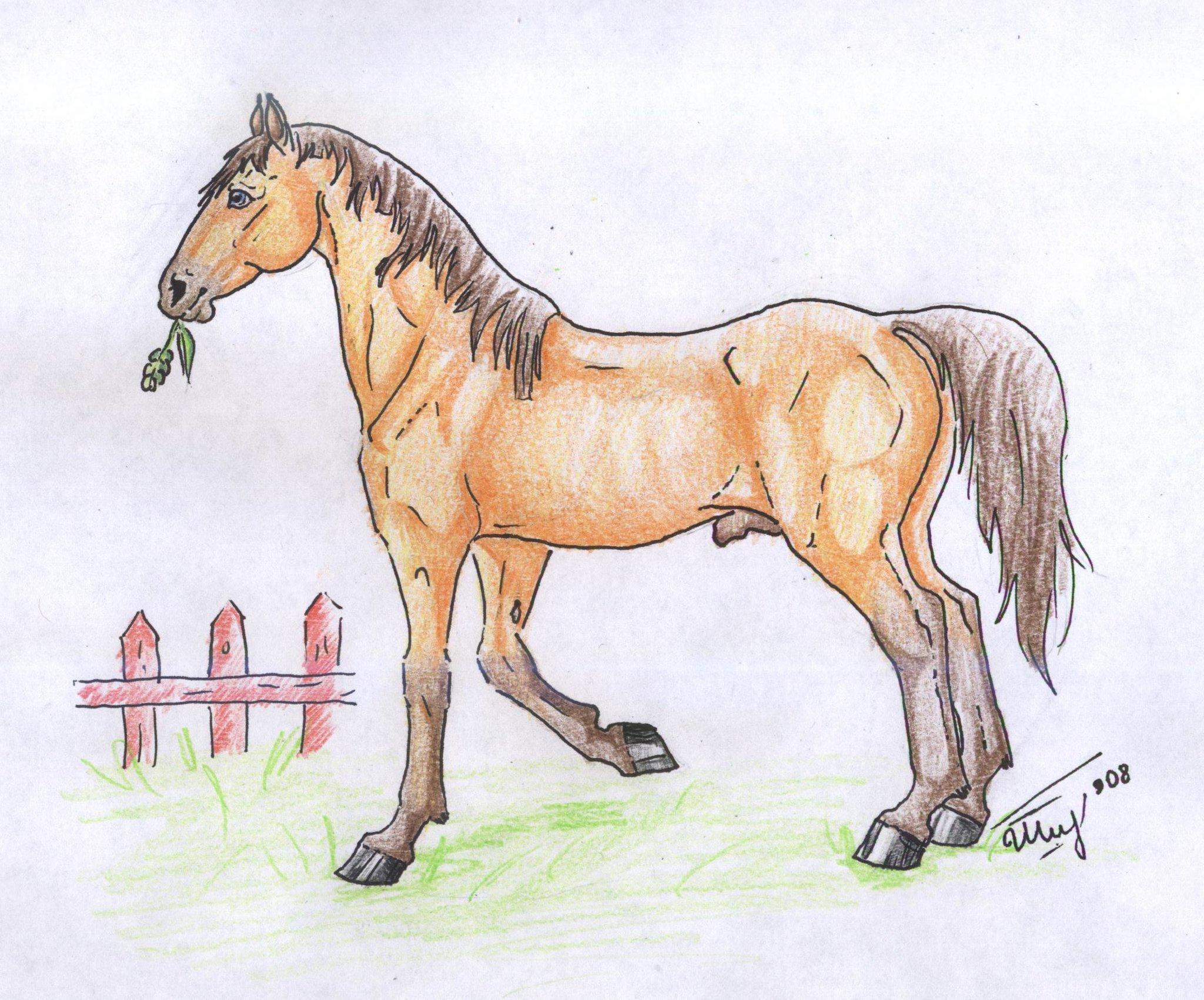 Картинки лошади нарисованные карандашом для детей
