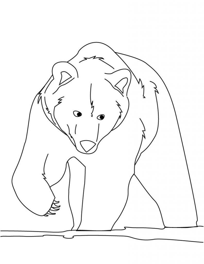 рассорки рисунки медведя карандашом сделать фото