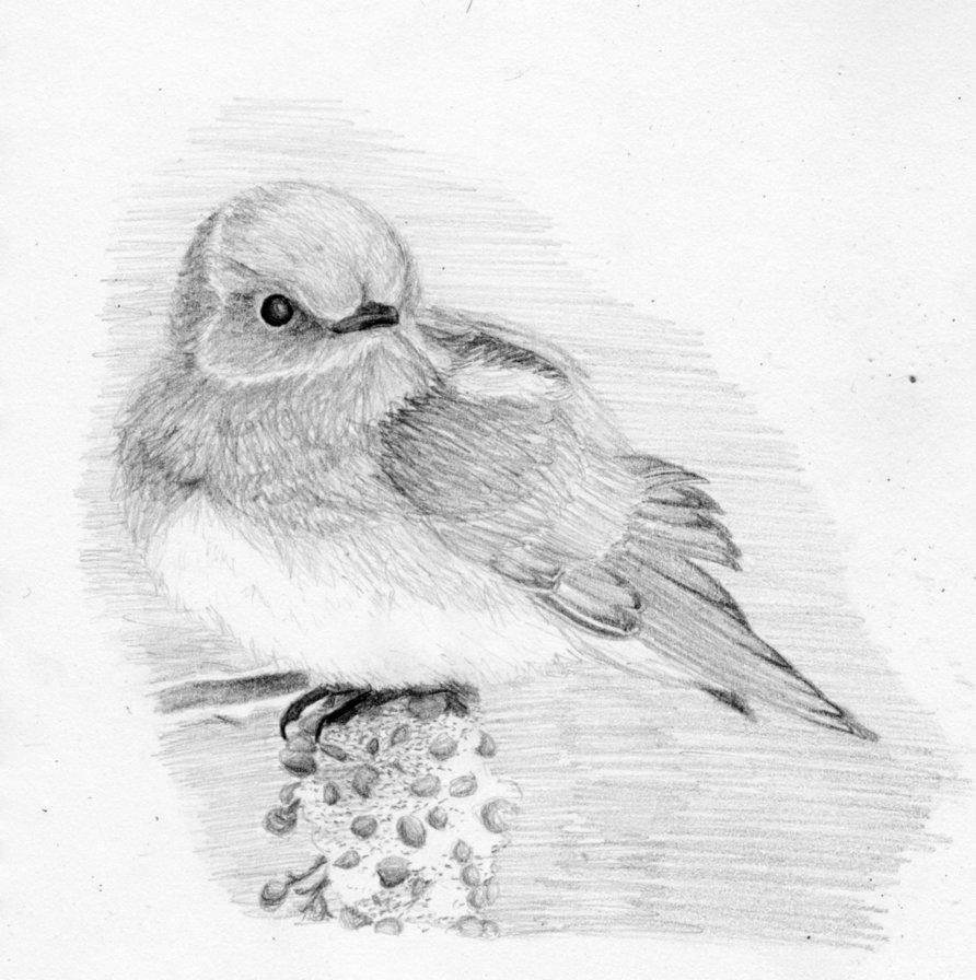 Картинки птички нарисованные карандашом