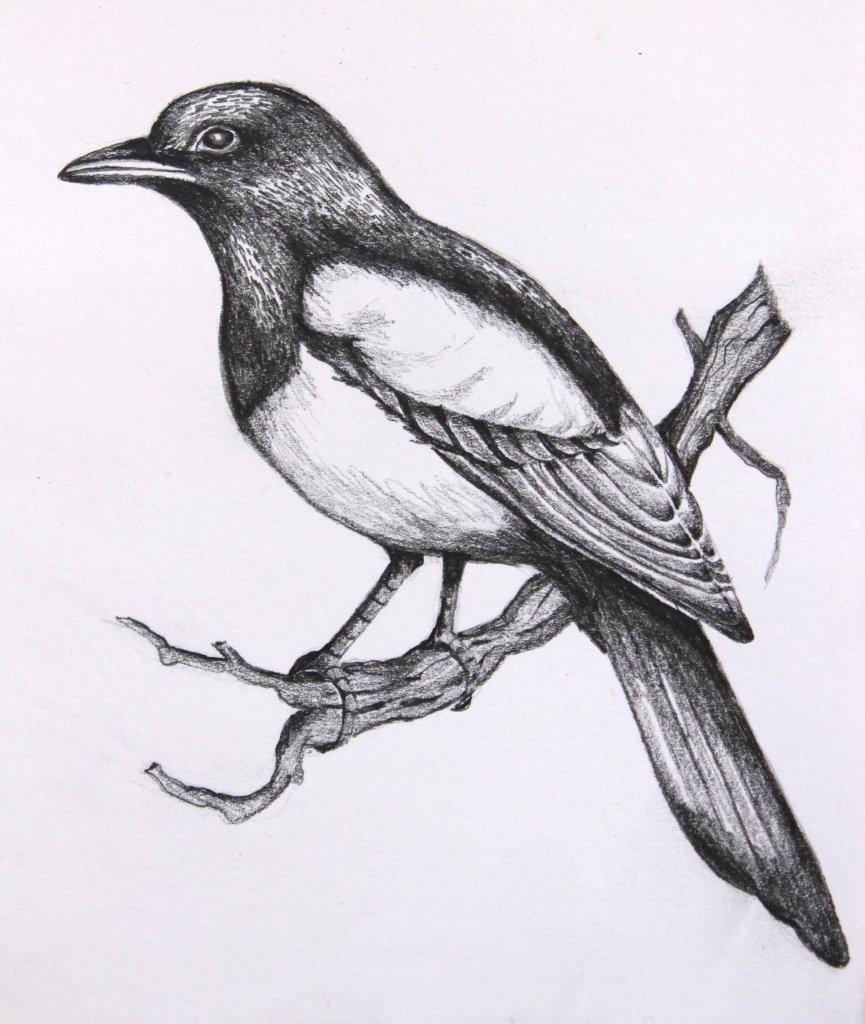 птица рисунок срисовать отличить минерал подделки