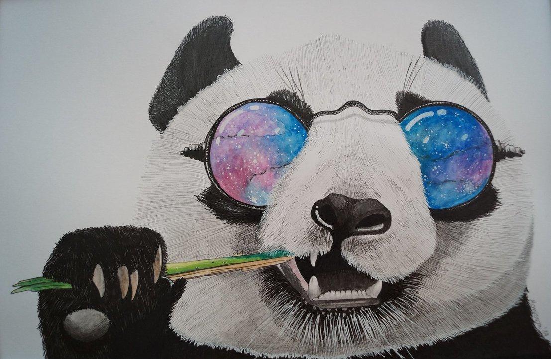 Картинки медведей с очками