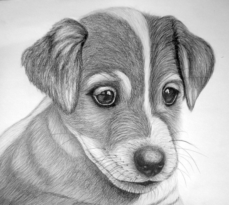 Самые лучшие рисунки карандашом