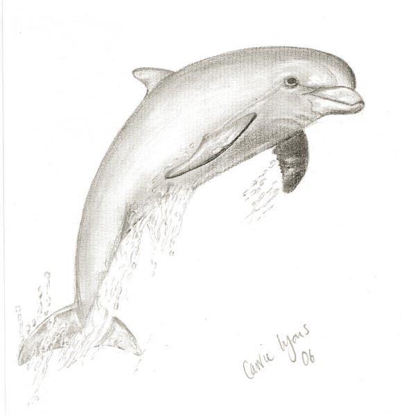 Нарисованные картинки карандашом дельфин