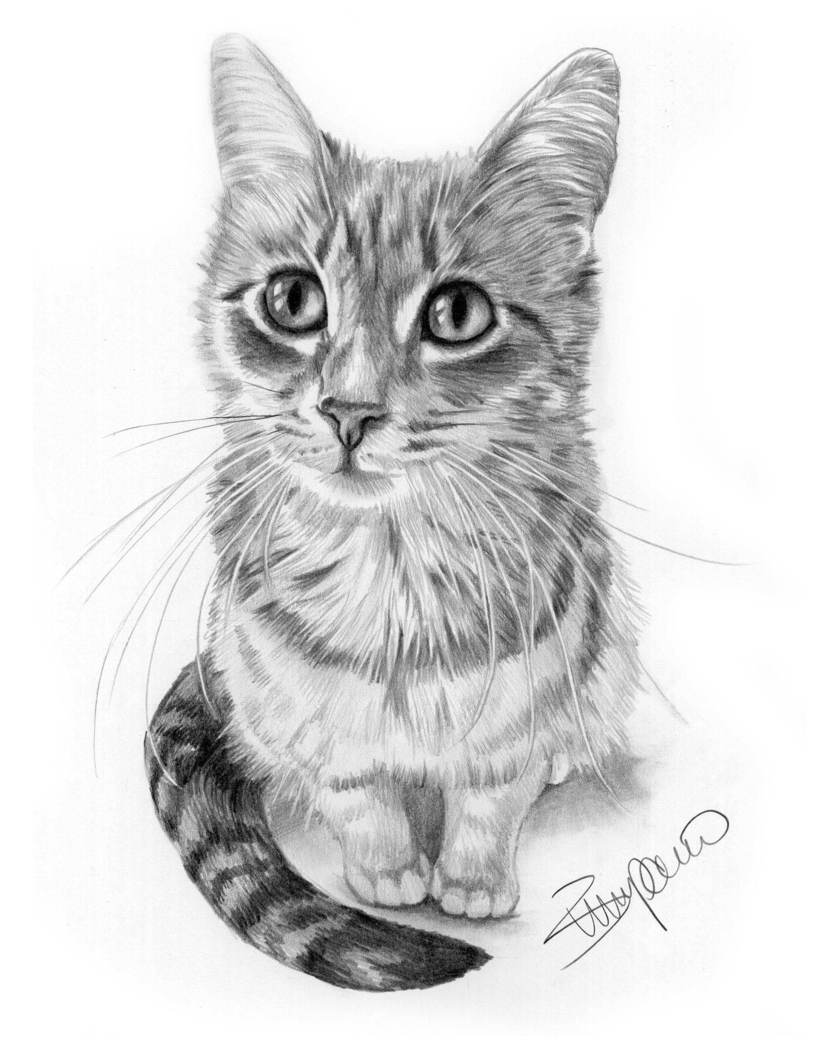 Рисунки для срисовки кошки карандашом