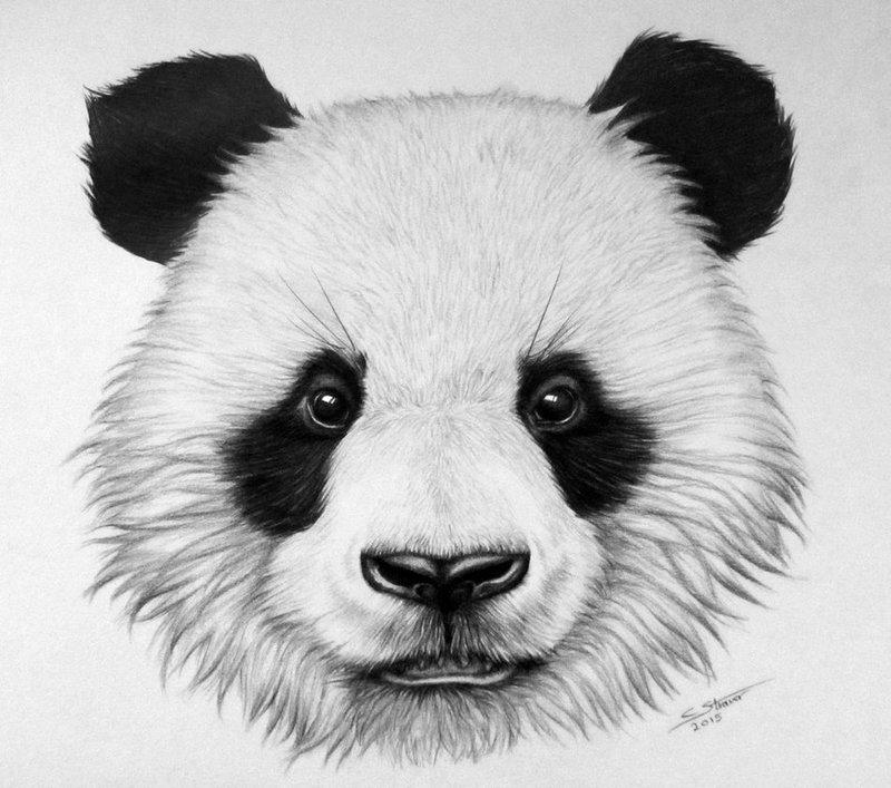панда морда картинка спится утром ранним