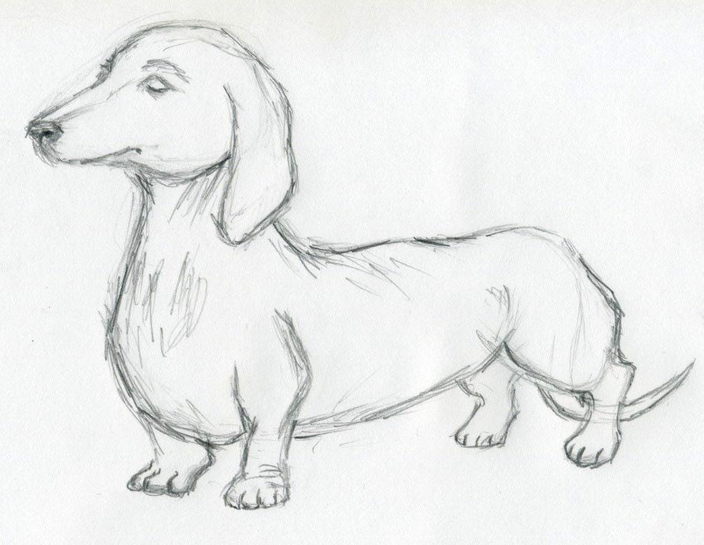 Картинки собаки нарисованные карандашом легкие и красивые для срисовки, летием госавтоинспекции