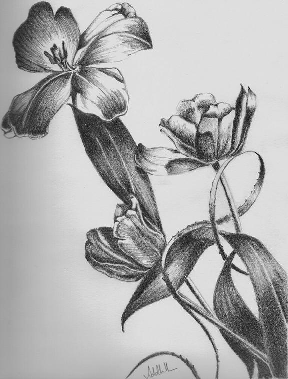 Рисунки цветов для срисовки карандашом