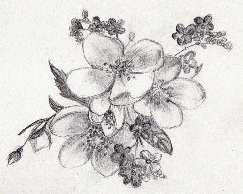 Рисунки карандашом: цветы