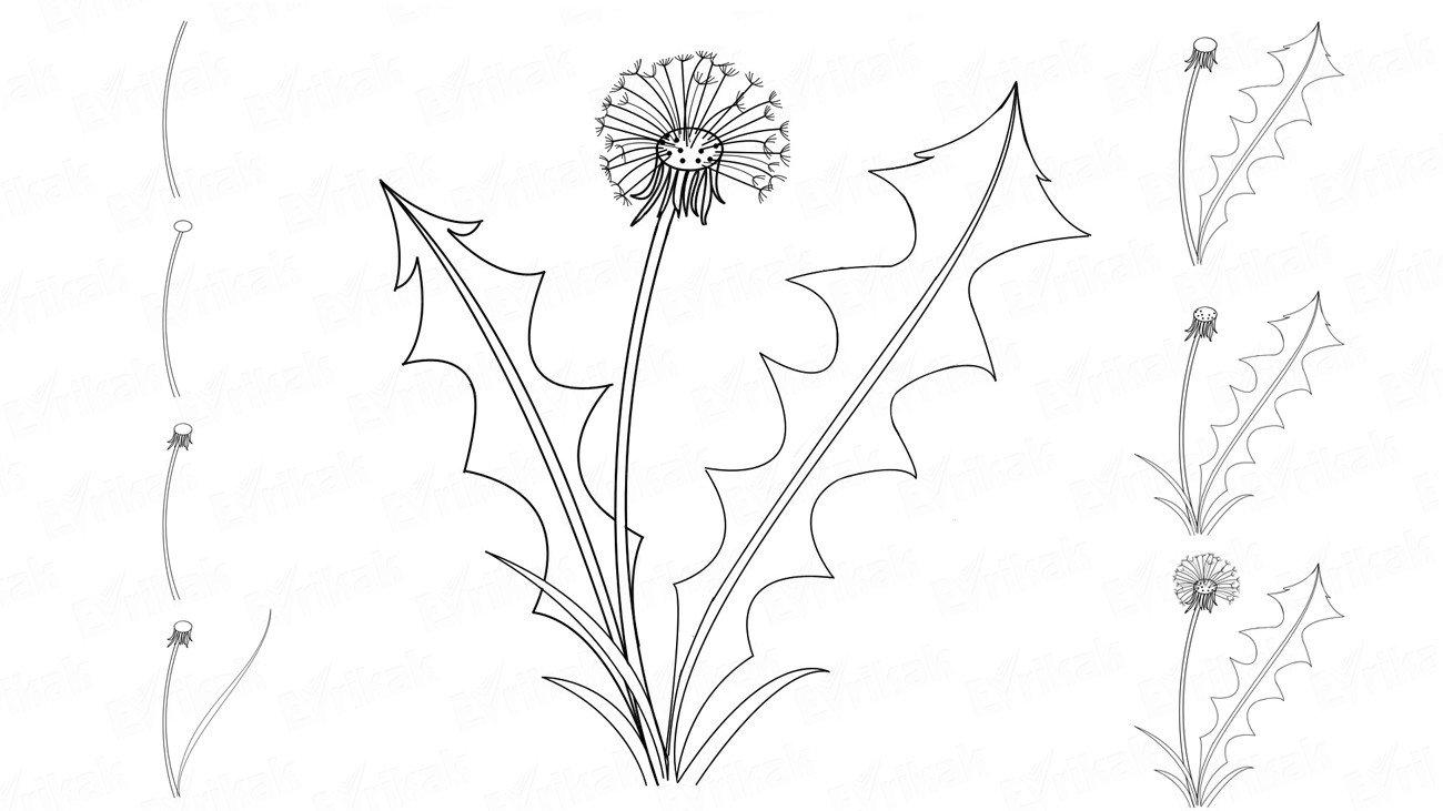 Цветок одуванчик картинка распечатать шаблон
