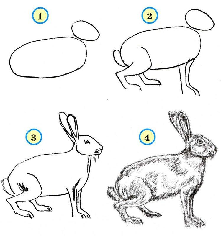 нарисовать поэтапно зайчика по картинке подкова специализируется изготовлении