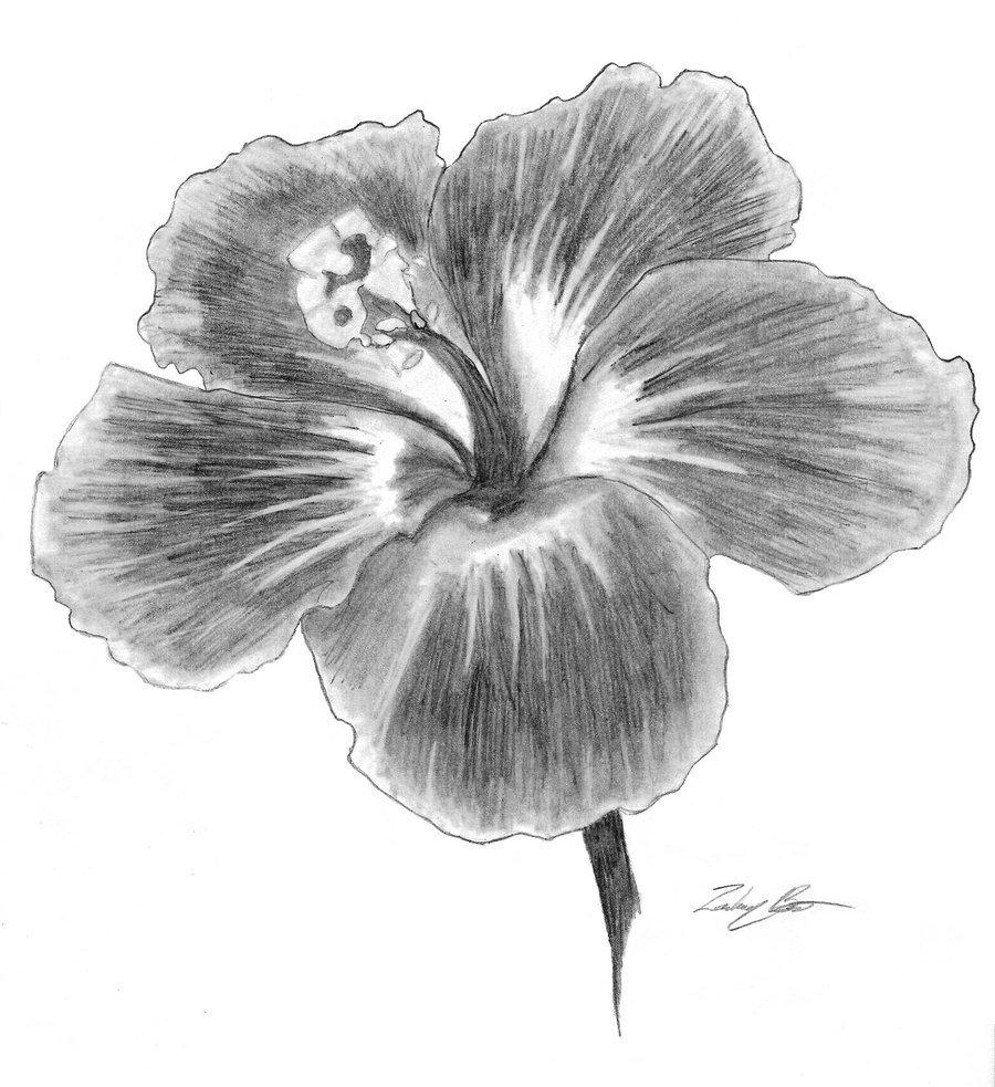 Папе день, картинки цветы нарисованные карандашом