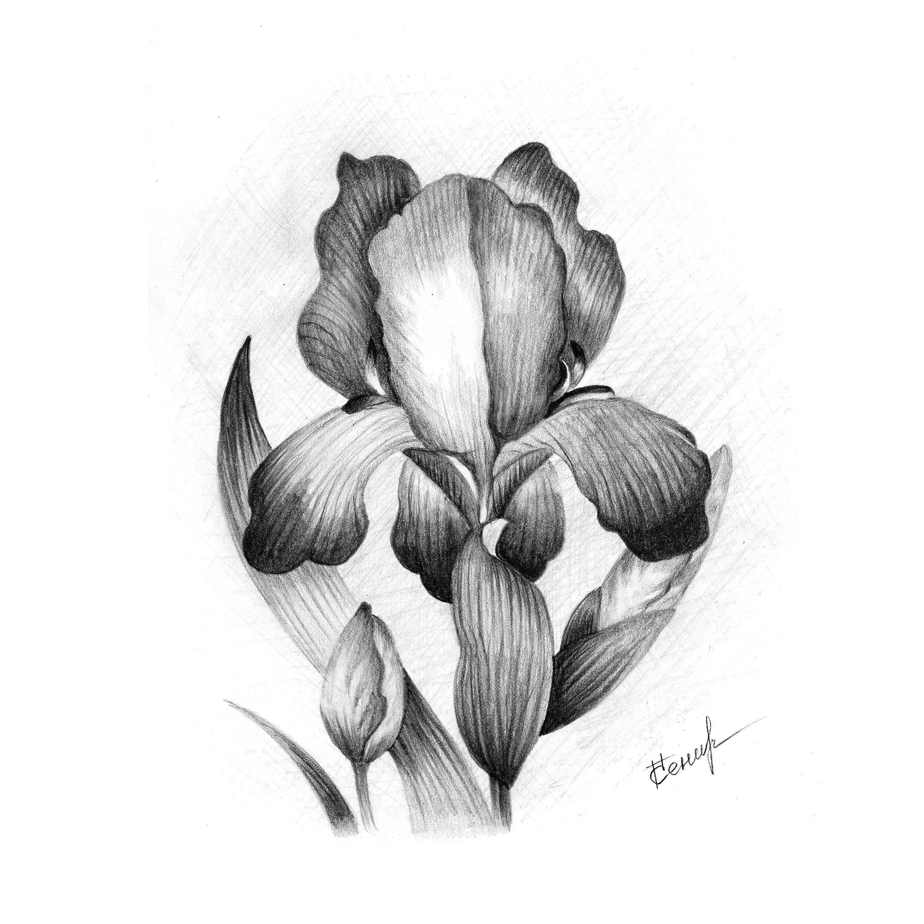 Новым, картинки цветы нарисованные карандашом