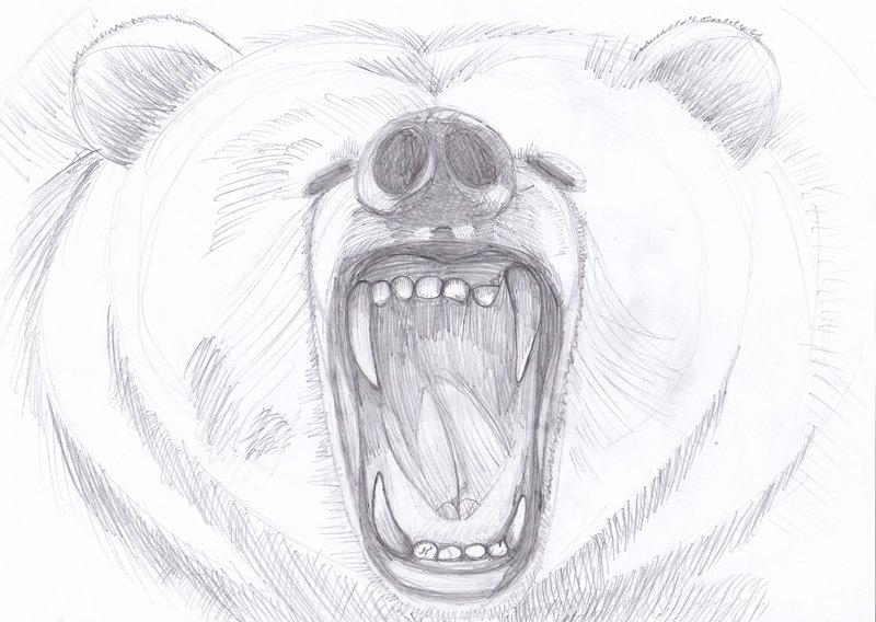 Прикольные рисунки медведей карандашом