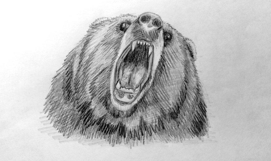 Картинки бурого медведя карандашом