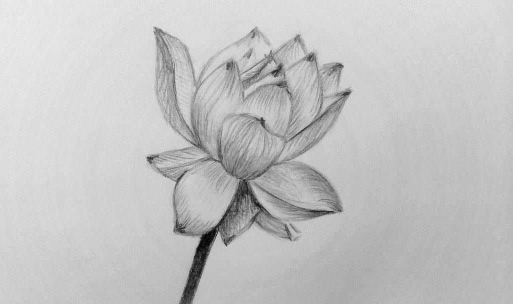 Картинки для срисовки для начинающих цветы