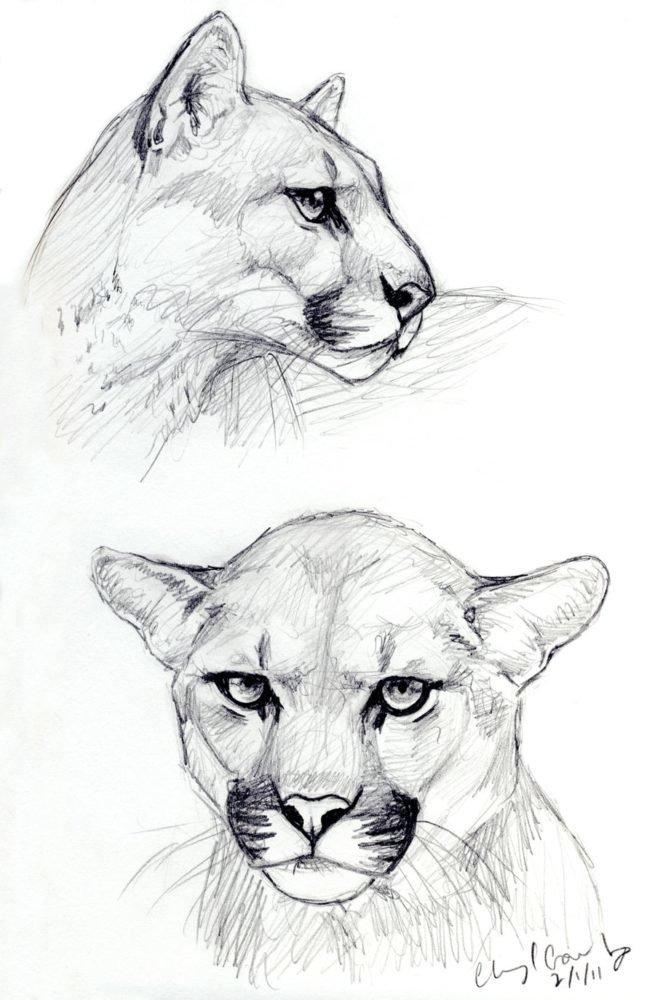 Самые красивые картинки карандашом для срисовки