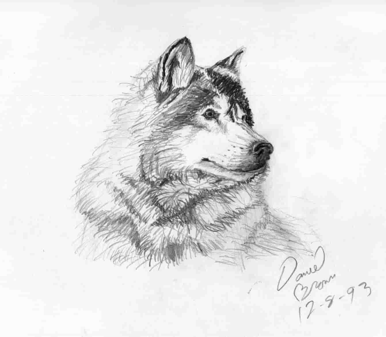 площадка рисунки животных карандашом для начинающих художников днем