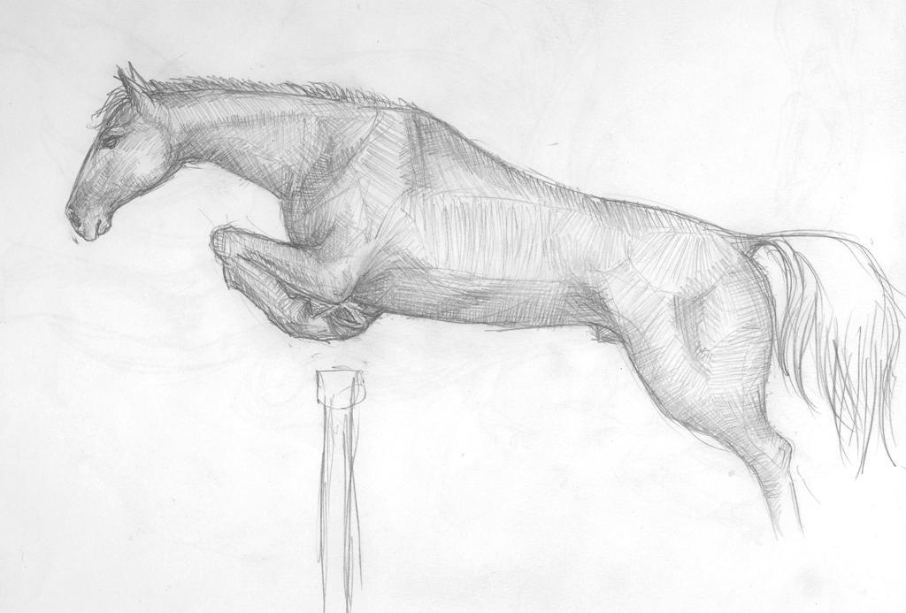 Рисунок лошадь простым карандашом