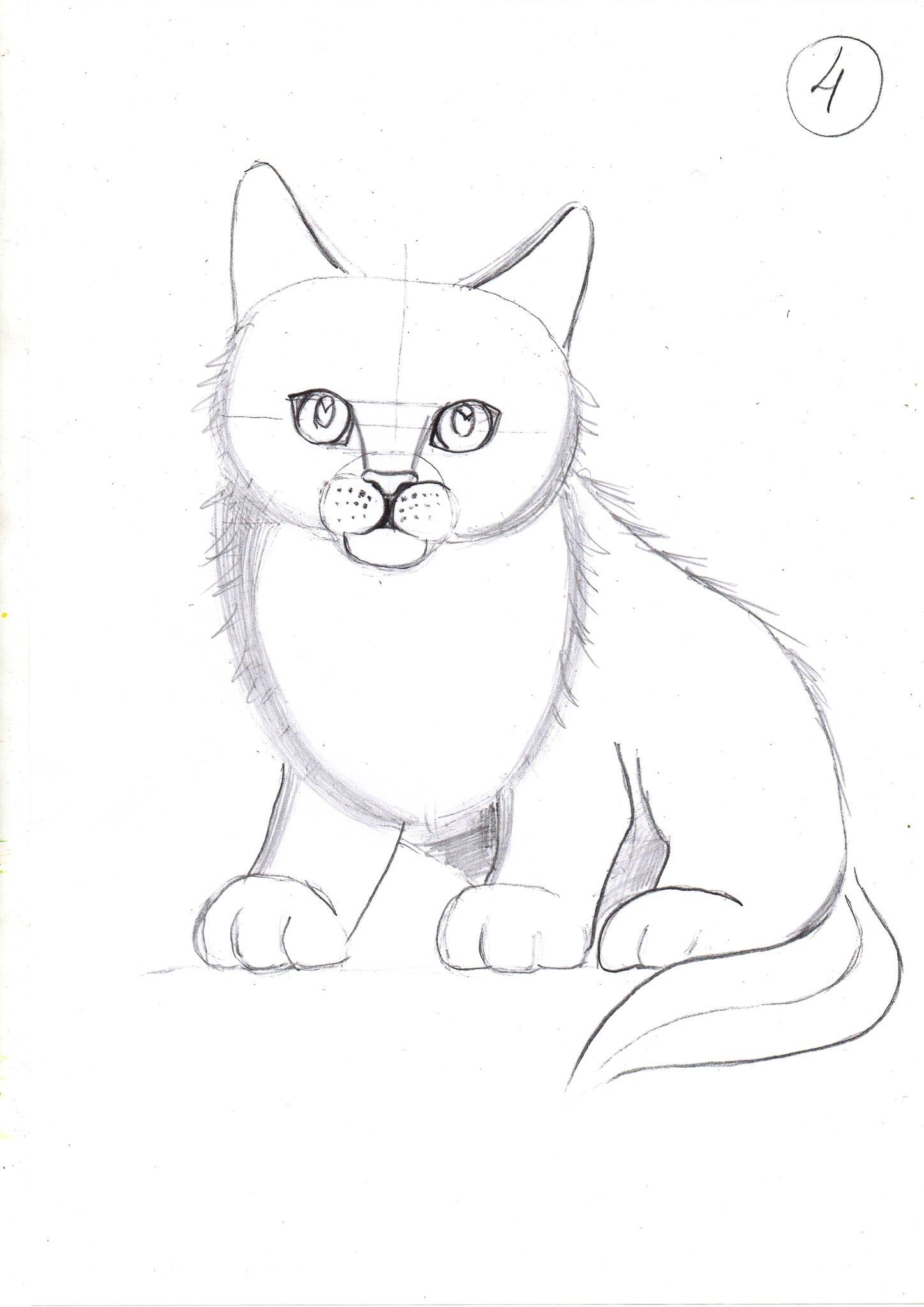 Картинки котов для срисовки карандашом для начинающих