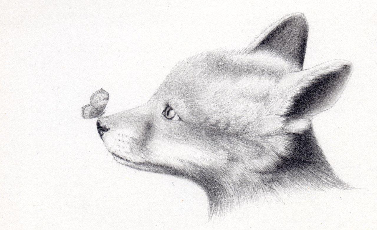 случай если картинки про животных карандашом нравилось