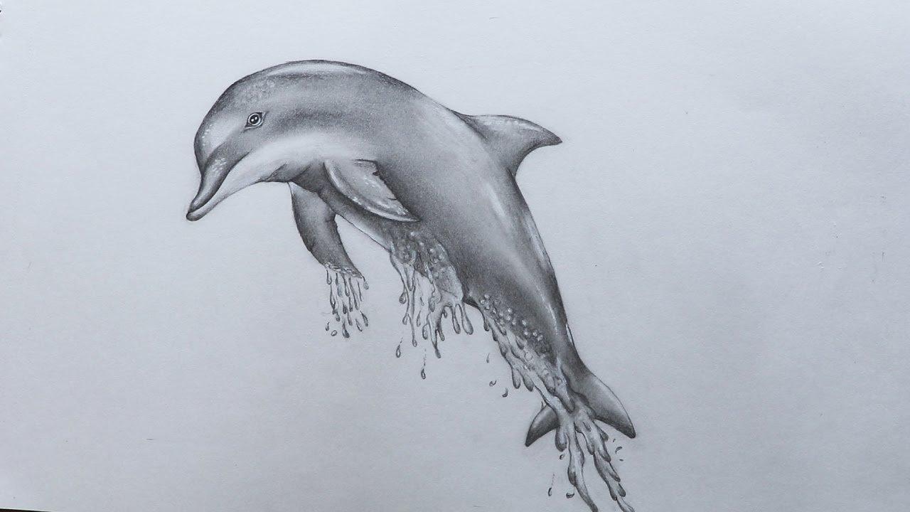 рисунки с дельфинами карандашом
