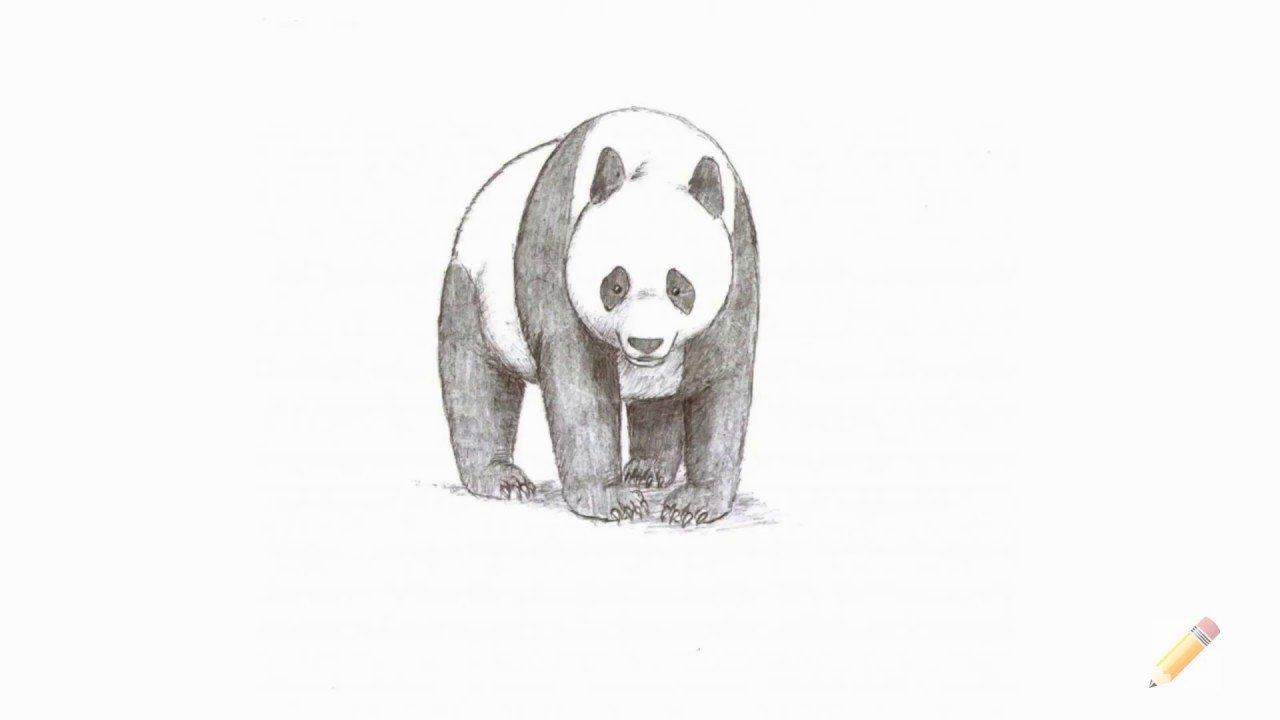 этом рисунок панды поэтапно дыра прикрытая