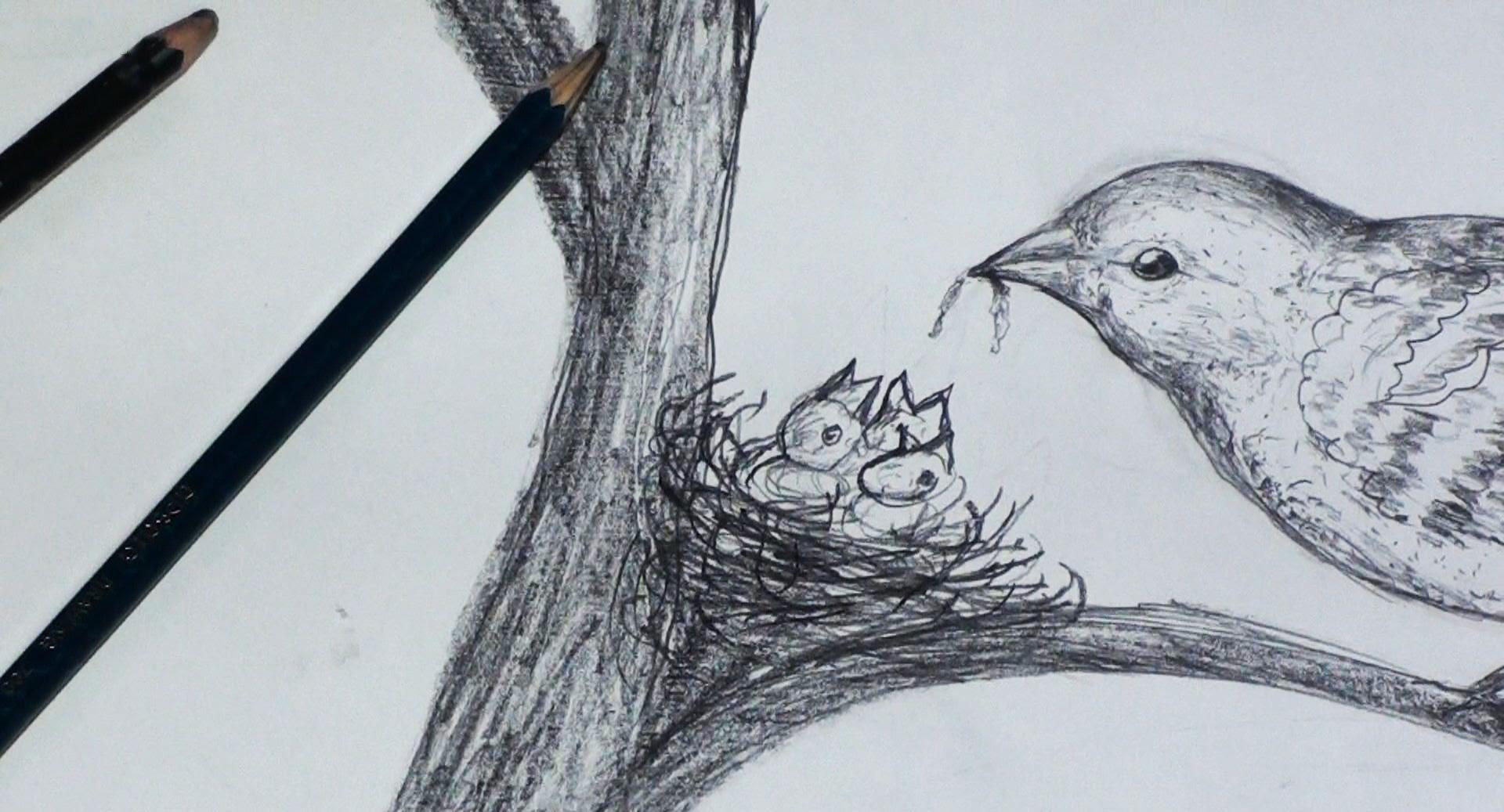 Картинки птиц красивые карандашом