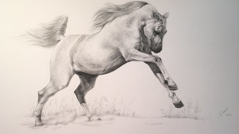 Лошадь: рисунок карандашом