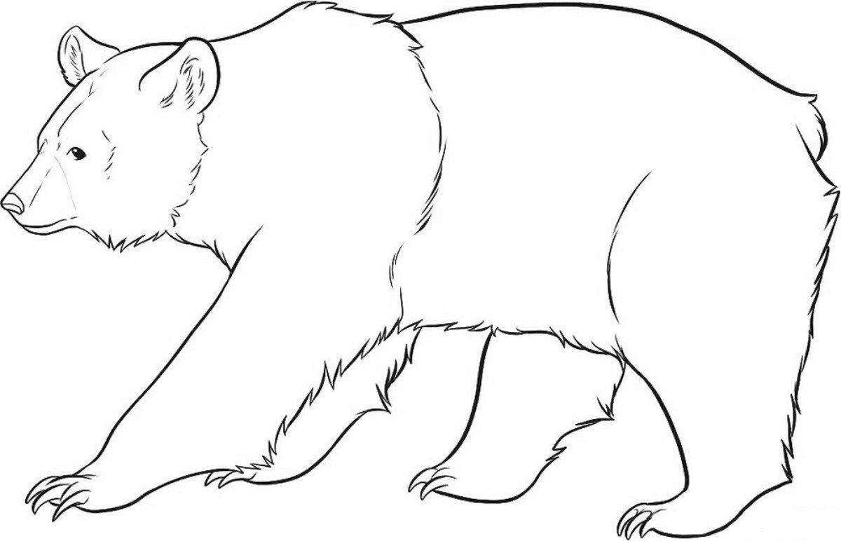 Рисунки картинки медведя, необычные картинки добрым