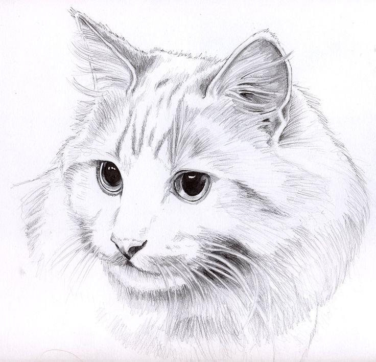 Рисунки кошечек карандашом